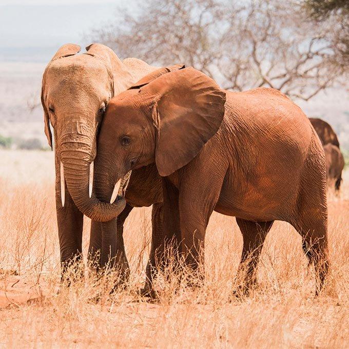Get to Know The Sheldrick Wildlife Trust